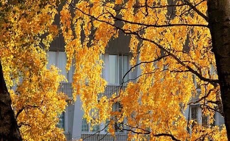 Syksyn värikkäät lehdet