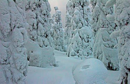 Talvinen Tammikuu 2012 taustakuva
