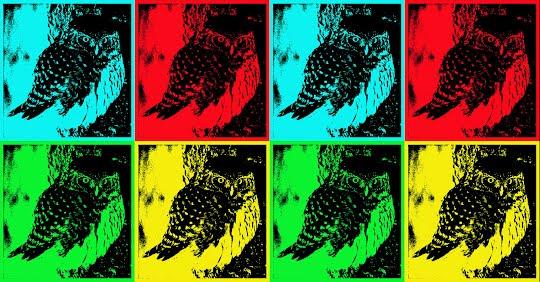 Andy Warhall pöllö