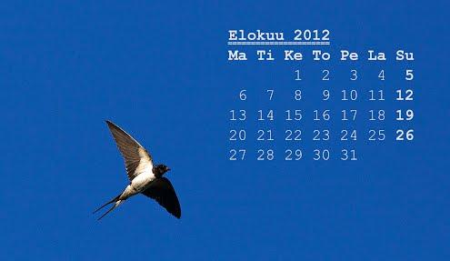 Elokuun 2012 kalenteri, haarapääsky