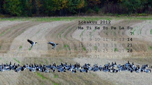 Tietokoneen taustakuvassa lokakuun 2012 kalenteri