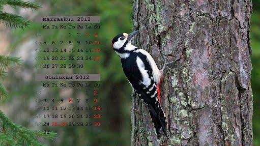 Taustakuvat, marraskuun 2012 kalenteri