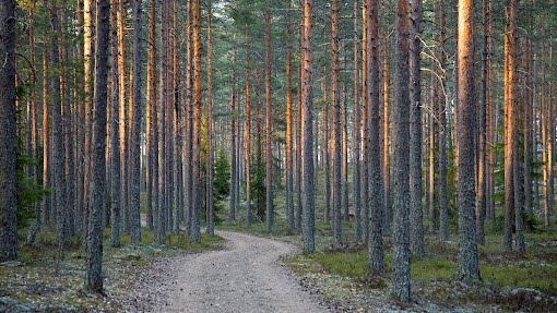 Metsätie pitkäperjantaina 2014