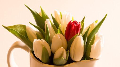 Tammikuun tulppaanit